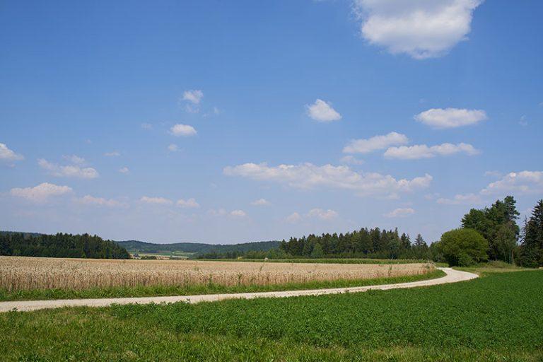 Wanderweg Wandern Weizen Waller Brauner Hirsch