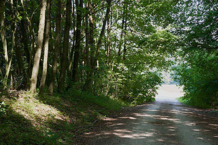 Wanderweg Wandern Wald Waller Brauner Hirsch